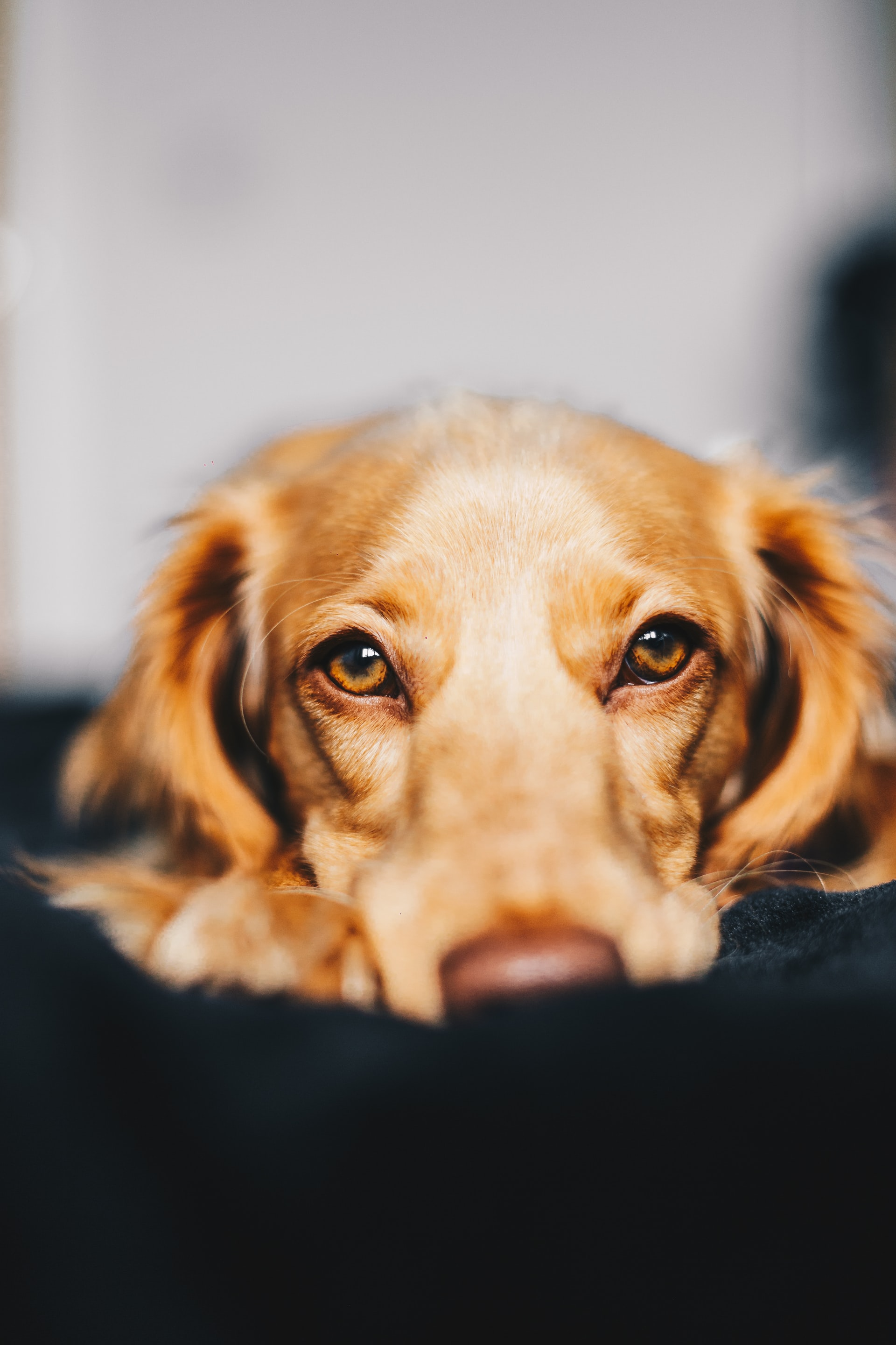 Medway Pet Owners - Keep your furry friends safe and sound this Bonfire Night