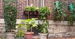 How to inject urban gardening trends into your city home