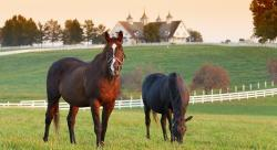 What is Equestrian Property? A Buyer's Guide