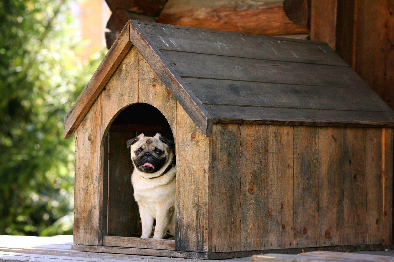Seven interior design hacks for pet lovers