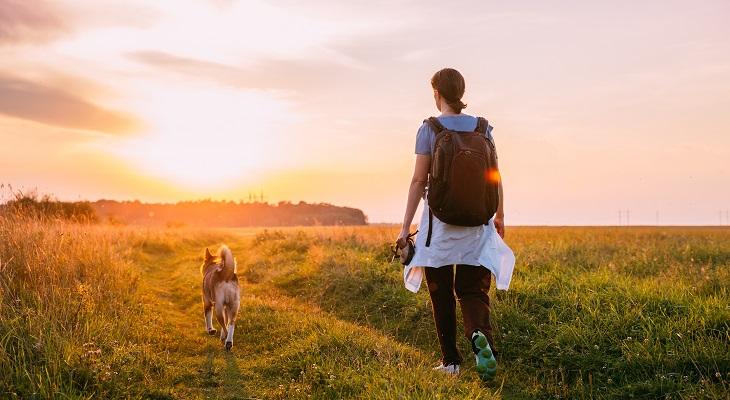 header_british_summer_walks