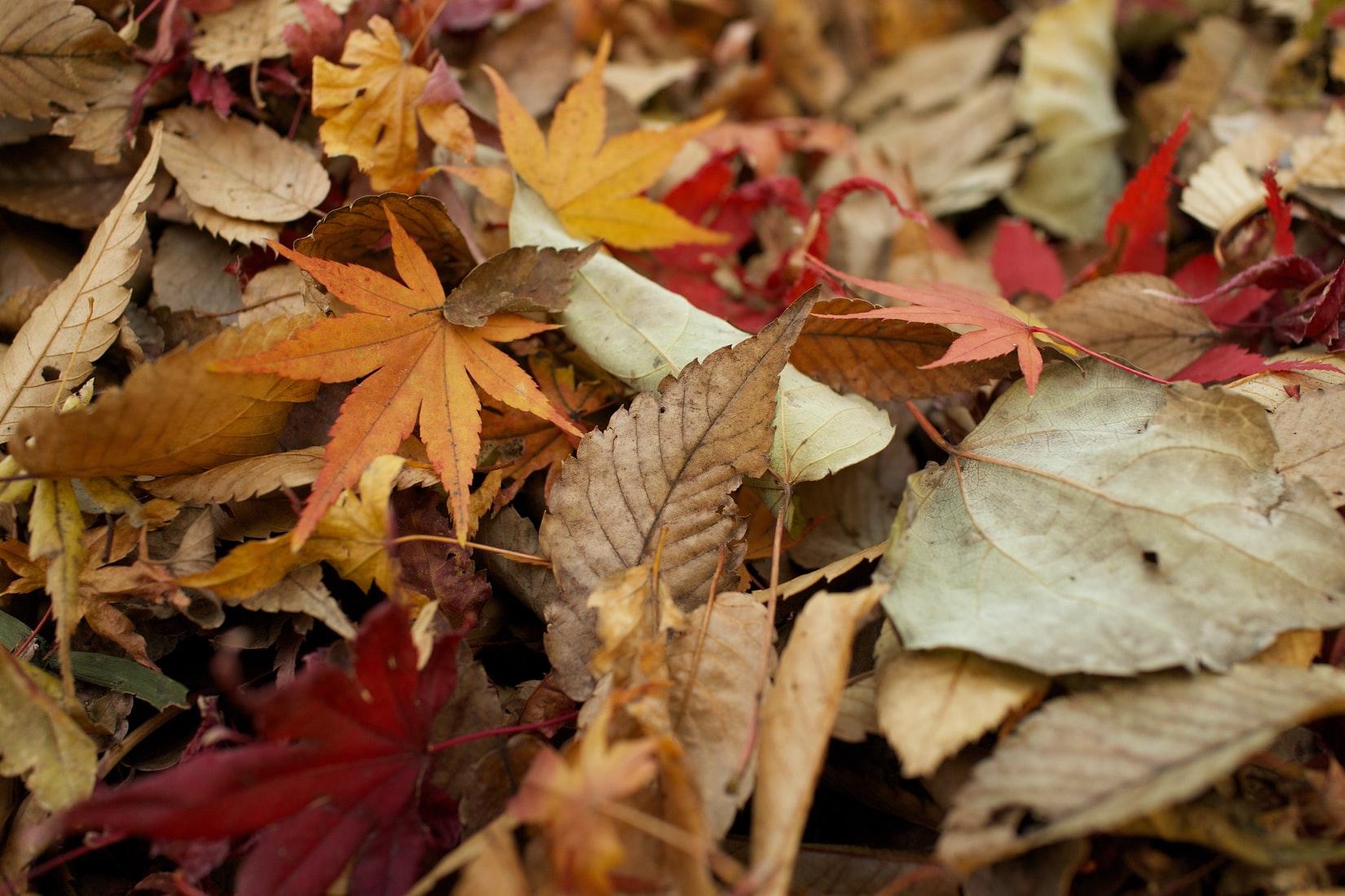 mansons_home__autumn_hd