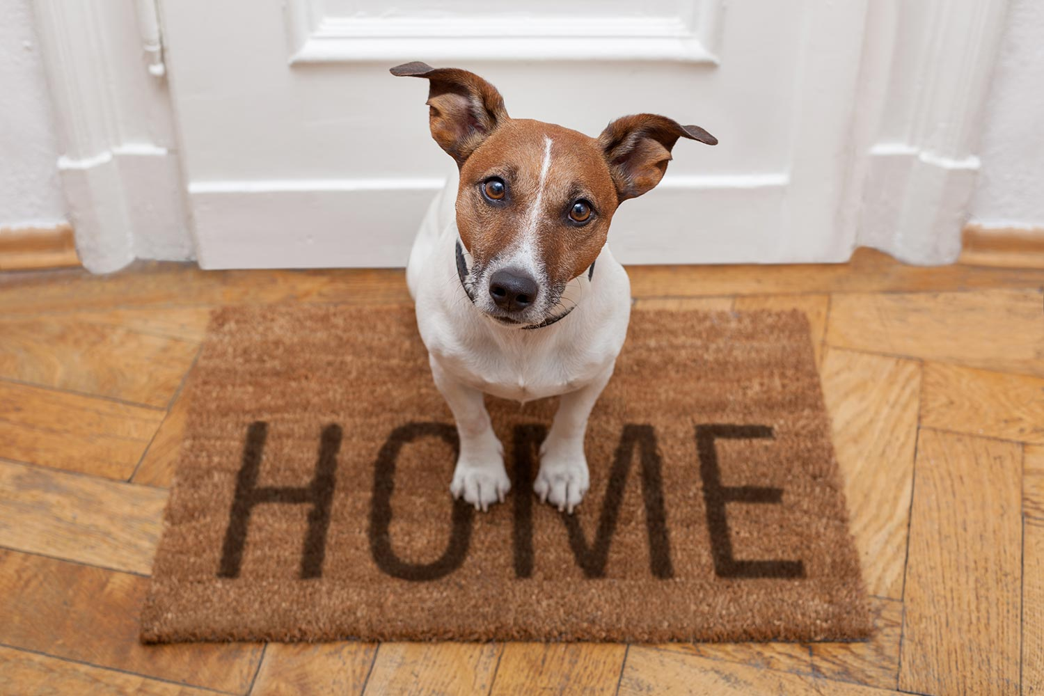how-to-prepare-your-home-for-a-new-pet