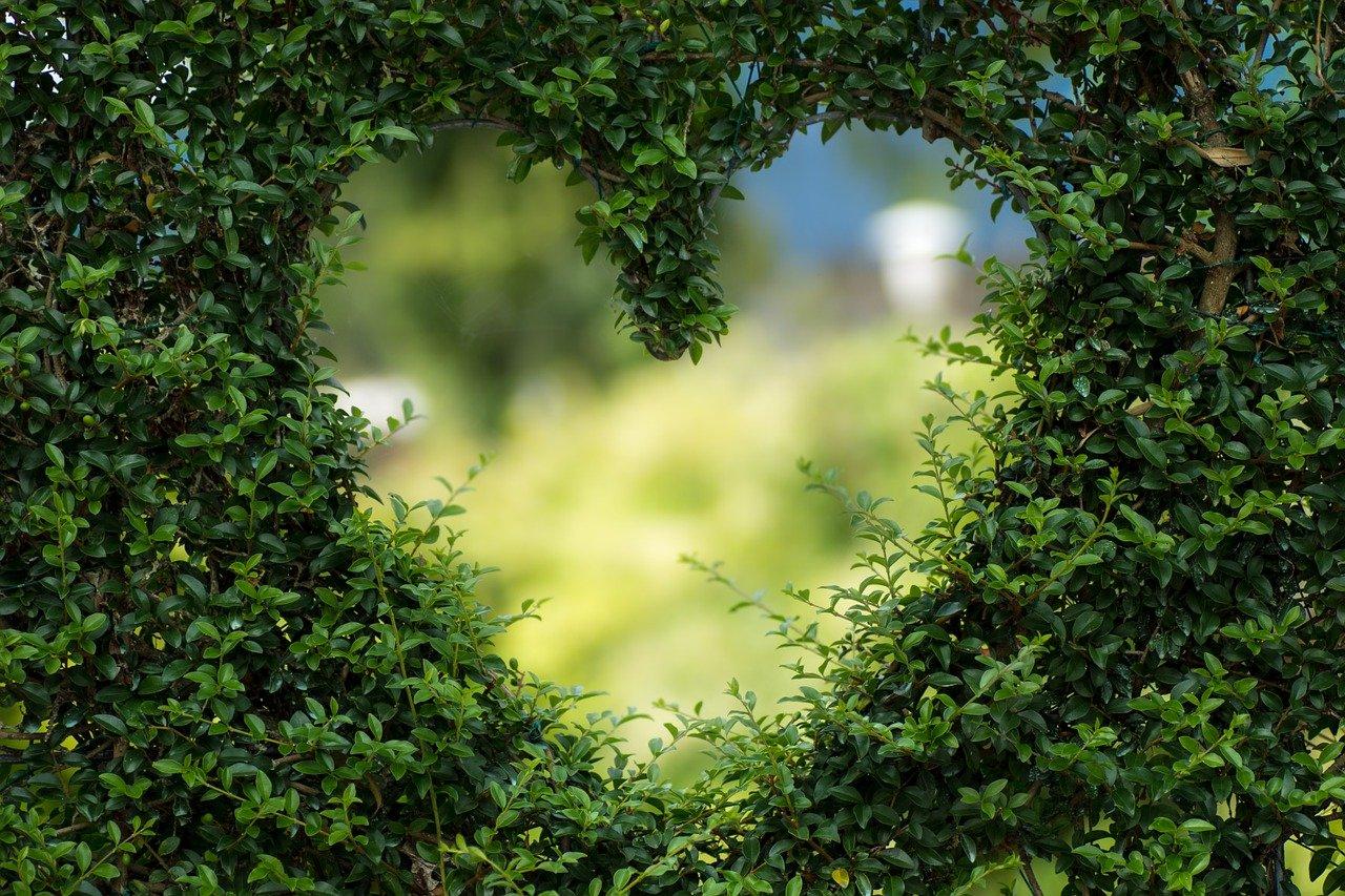 2804_love_your_garden