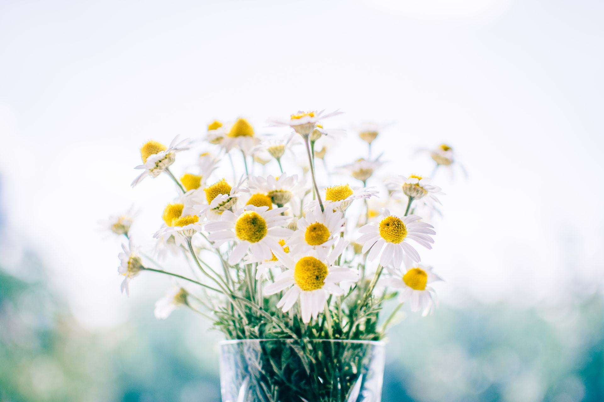 2903_spring_flowers