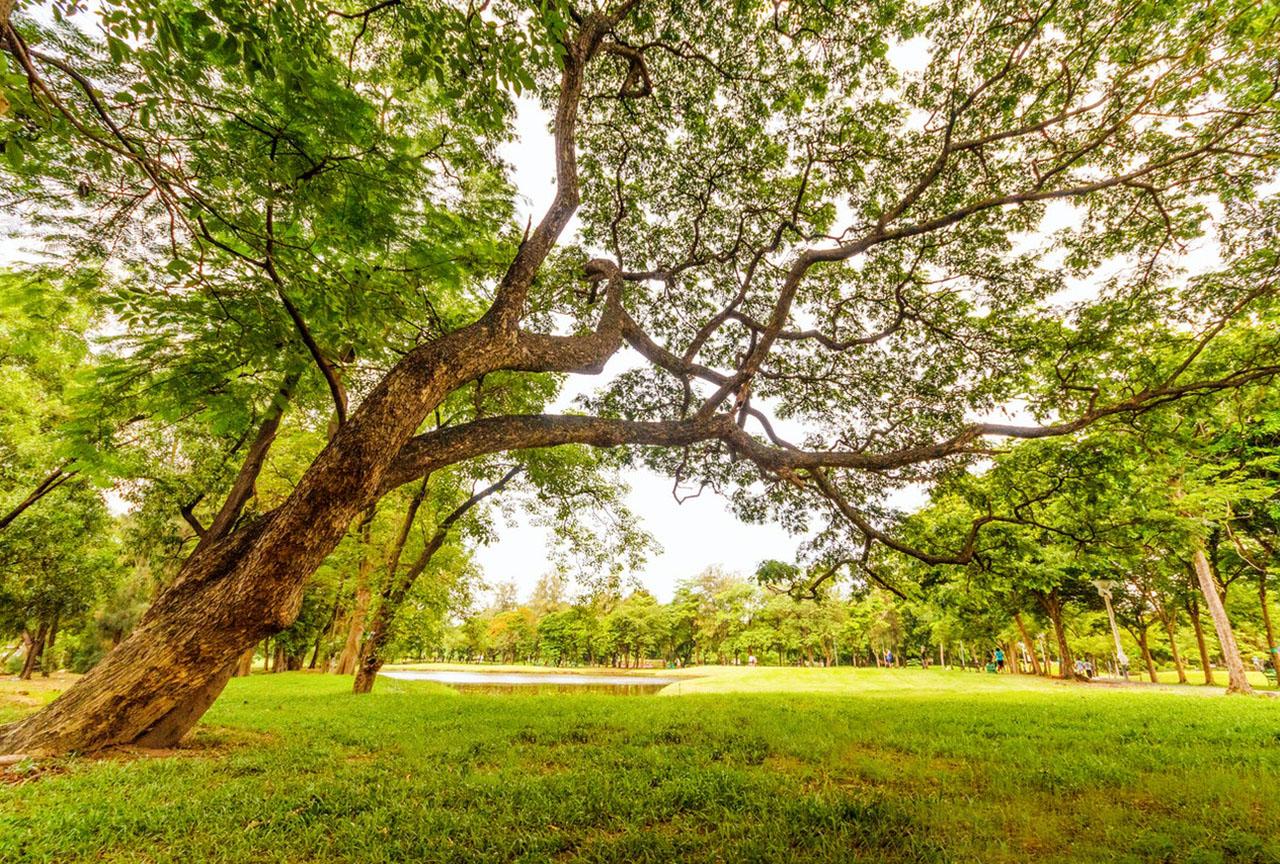 love_parks_week_image