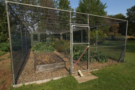 fruit veg cage