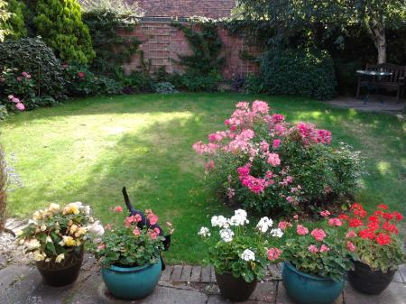 summer garden pic