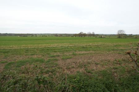 fields beyond