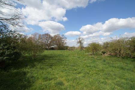 main meadow alt