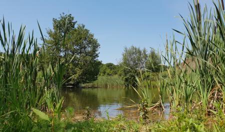 Waters Edge , Mytchett