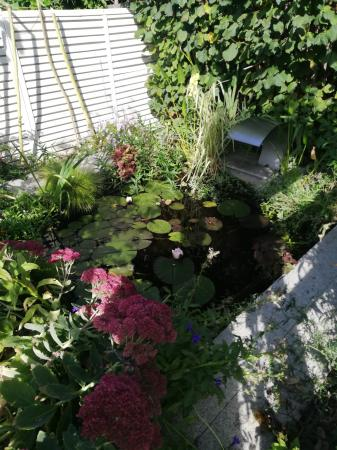 Water feature/pond