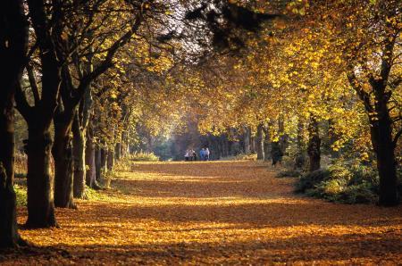 Weald Country Park-3.jpg