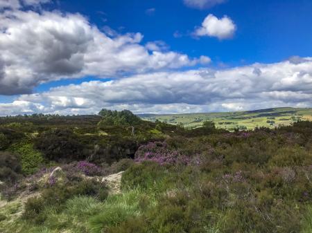 Norland Moor